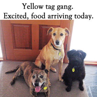 Yellow Tag Gang